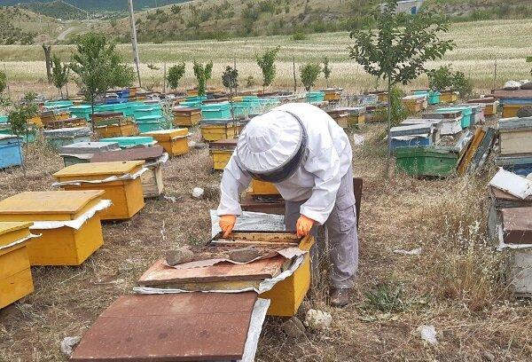 روحانی که در ۷۰سالگی زنبورداری میکند +عکس