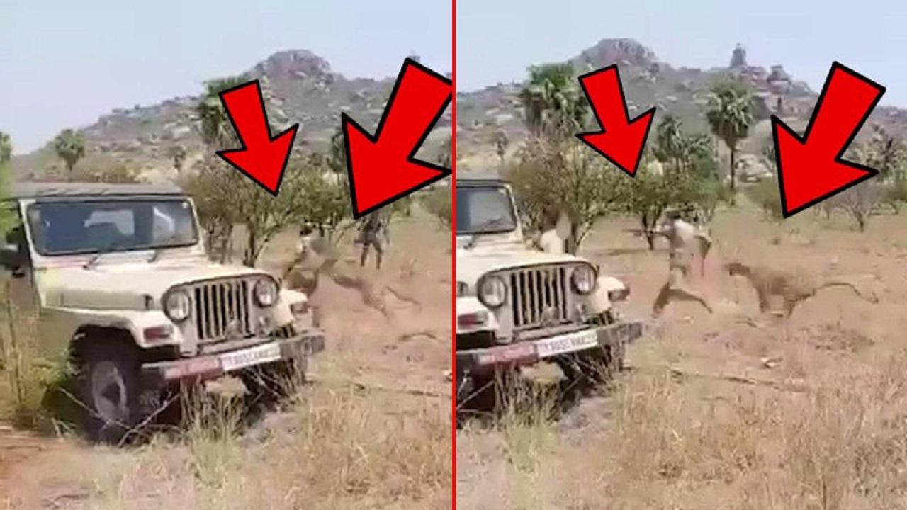 لحظه وحشتناک حمله پلنگ به مامور جنگلبانی! +عکس و فیلم