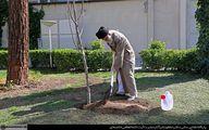 تصاویر: کاشت نهال توسط رهبر انقلاب در هفته منابع طبیعی
