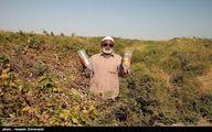 اعلام زمان تسویه سود سهام عدالت روستاییان و عشایر