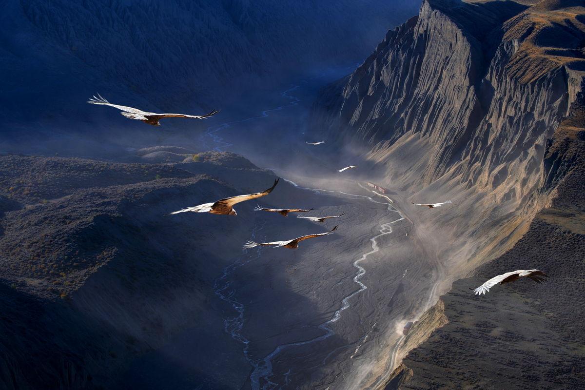 پرواز دیدنی عقابها در آسمان +عکس