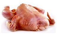 مرغ سالم را با این رنگ بشناسید