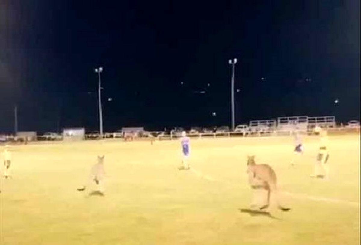 جیمی جامپها از جنس کانگرو مسابقه فوتبال را بهم زدند! +عکس و فیلم