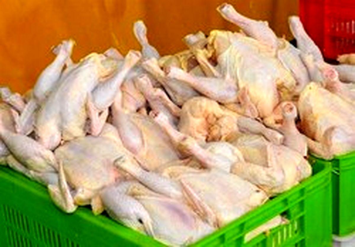 توزیع مرغ منجمد ۸ هزار و ۹۰۰ تومانی از فردا برای مقابله با گرانی