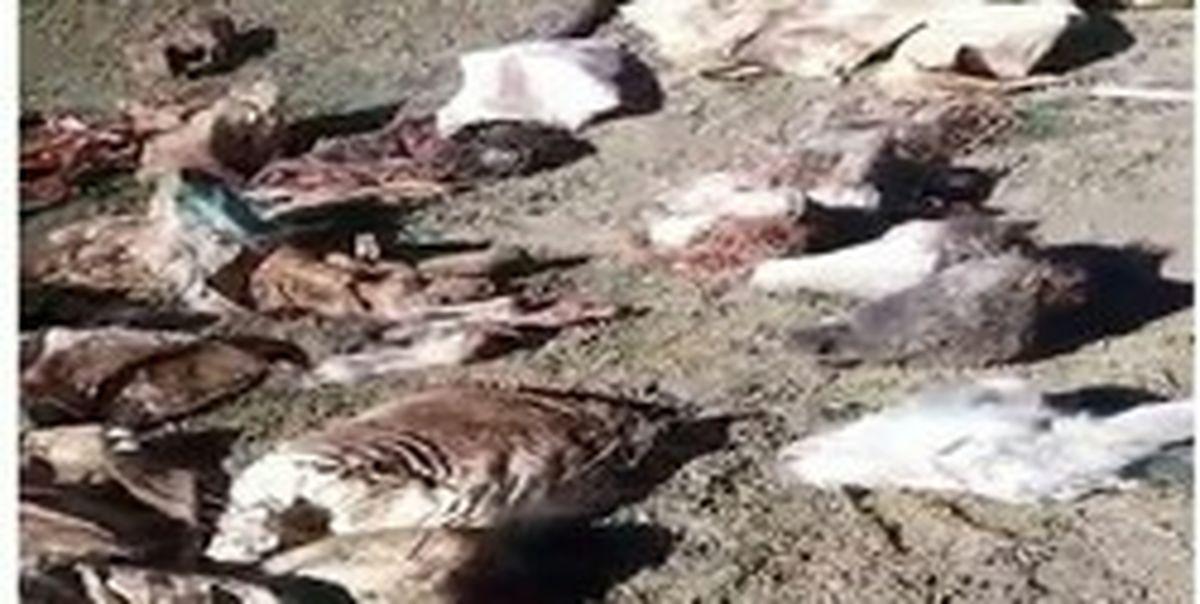 لاشههای الاغهای ذبح شده در ابهر جنجالی شد! +عکس