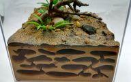 قیمت باورنکردنی فروش مورچهها در سنگاپور! +عکس