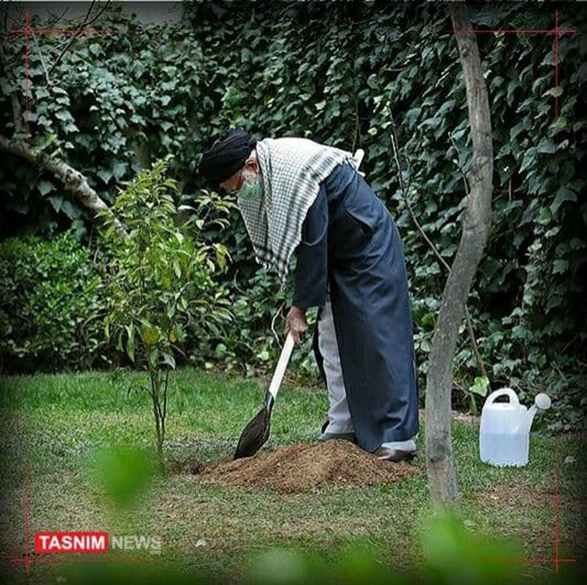 تصویری از رهبر معظم انقلاب در حال کاشت درخت