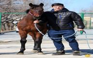 اسب جدید و میلیاردی سردار آزمون +عکس