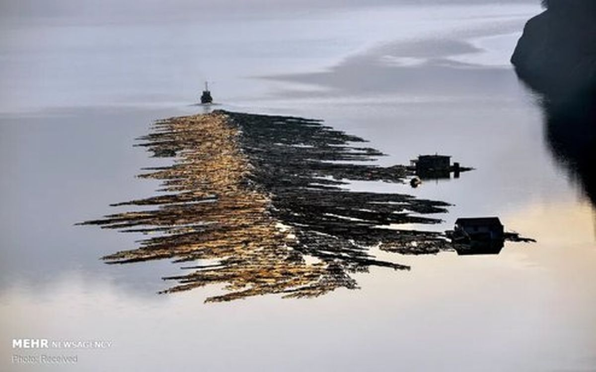 تصاویر: آب و طبیعت