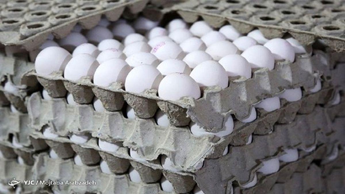 توقف صادرات تخممرغ دردسرساز شد