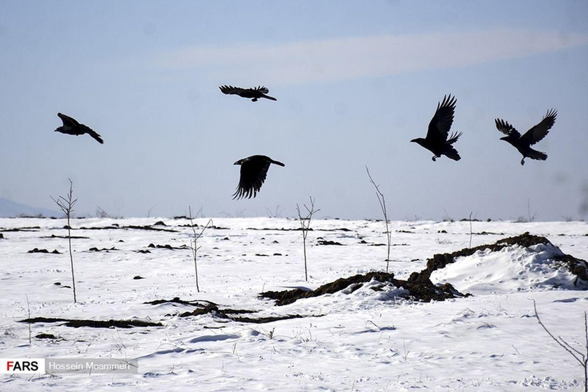 تصاویر: «برف» زمستانی بجنورد