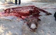 کشف محموله گوشت الاغ در بندرعباس