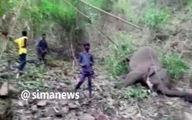 صاعقه به فیل ها زد! +فیلم