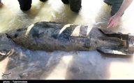 ماجرای انفجار بمب جنگی در شهر سیلزده پلدختر +عکس و فیلم