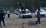 فرار یک گاو در روز عیدقربان از دست قصاب +عکس