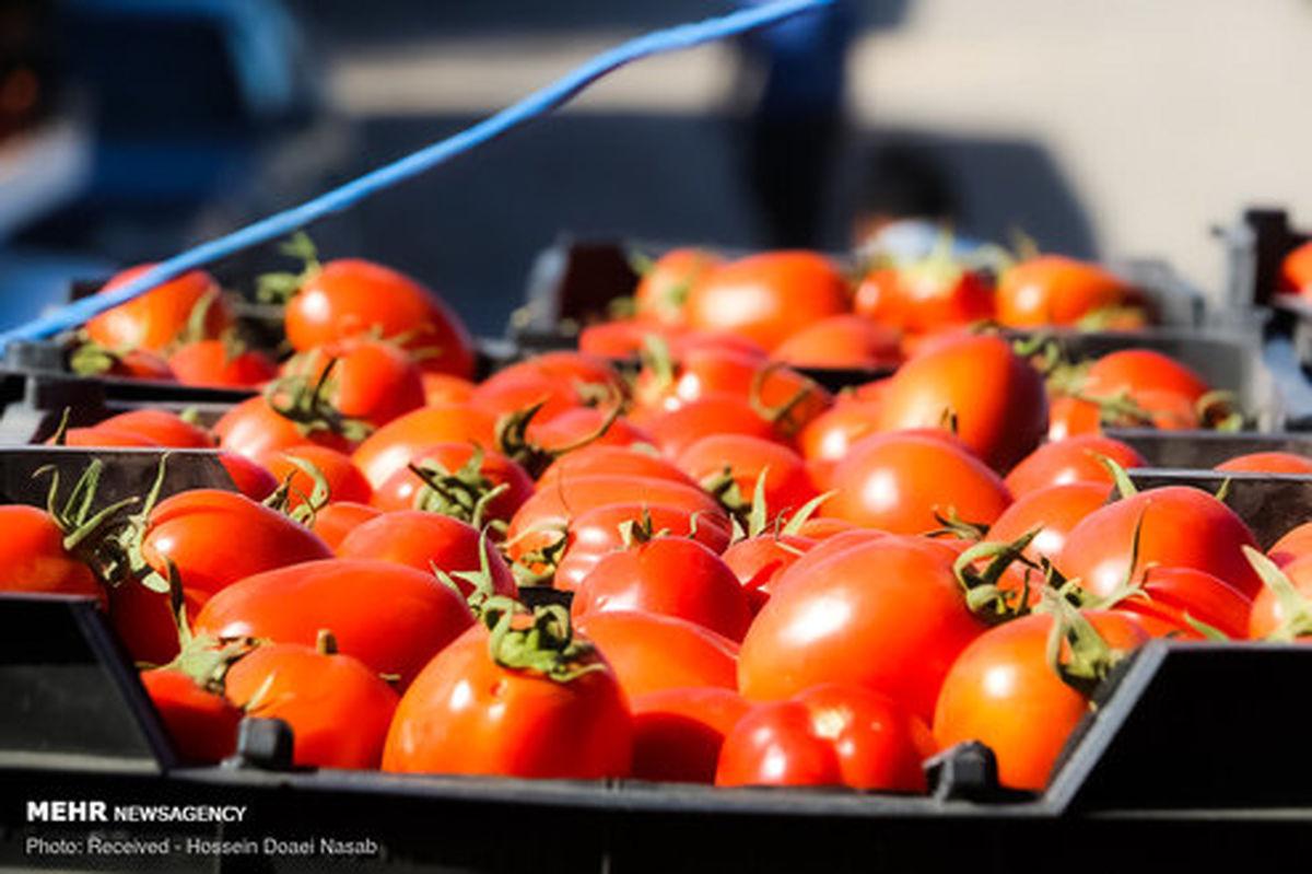 تصاویر: بازار کساد گوجه فرنگی