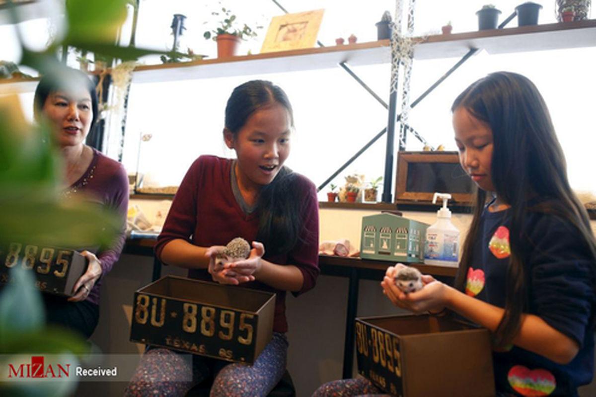 تصاویر: کافه جوجه تیغی در ژاپن