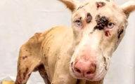 صحنه دردناک از شکنجه یک سگ توسط صاحبش +فیلم
