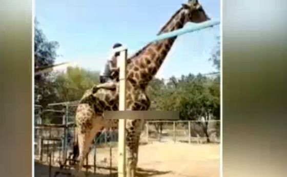 فیلم: تاثیر مصرف مواد مخدر در باغ وحش!