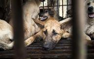 فیلم: نجات سگی که ۳ ماه در فاضلاب گیر افتاده بود