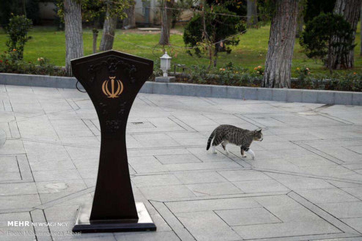 پرسه زدن یک گربه در حیاط پاستور +عکس