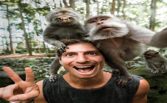 عکس: میمونها هم سلفی میگیرند!