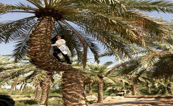 عکس: «الناز حبیبی» بالای یک نخل!