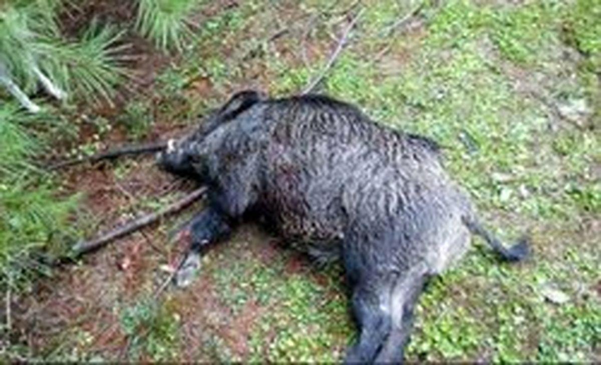 شلیک اشتباهی در شکار گراز،  جان ۲ سردشتی را گرفت!