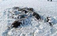 یخ زدن ۲۶ اسب در قزاقستان +عکس
