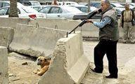 ماجرای کشتار سگها در کهریزک +فیلم و عکس