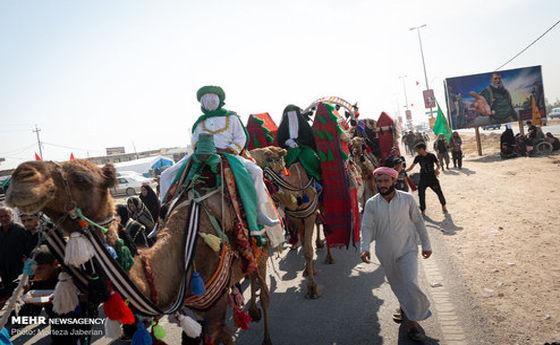 تصاویر: پیاده روی زائران اربعین در مسیر « حیدریه - طویریج »