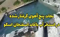 نجات پنج آهو تشنه از استخری در ایران +فیلم