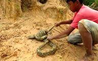 پسری شجاع یک ایگوانا را به راحتی از چنگ مار نجات داد! + فیلم