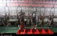 تصاویر: کشتارگاه طیور - همدان