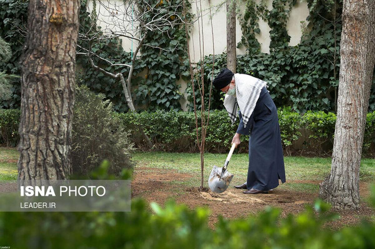 رهبر انقلاب چرا درخت میوه کاشتند؟