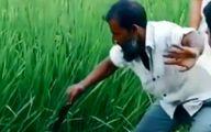 فیلم: سرکار گذاشتن عجیب اهالی محلی توسط مرد روستایی!