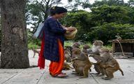 محبت جالب این زن به میمونها +تصاویر